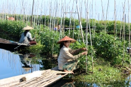 Tending the floating farms